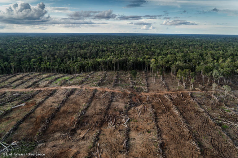 Documentation of landcover and oil palm plantation development in PT Internusa Jaya Sejahtera (PT IJS), part of the Central Cipta Murdaya group, in April 2018. Photo credit: © Ulet Ifansasti / Greenpeace