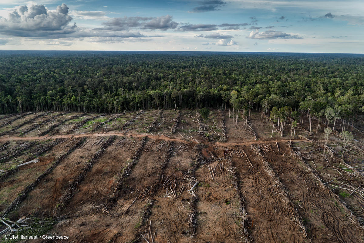 Documentation of landcover and oil palm plantation development in PT Internusa Jaya Sejahtera (PT IJS), part of the Central Cipta Murdaya group, in April 2018. Photo credit: © Ulet Ifansasti / Greenpeace