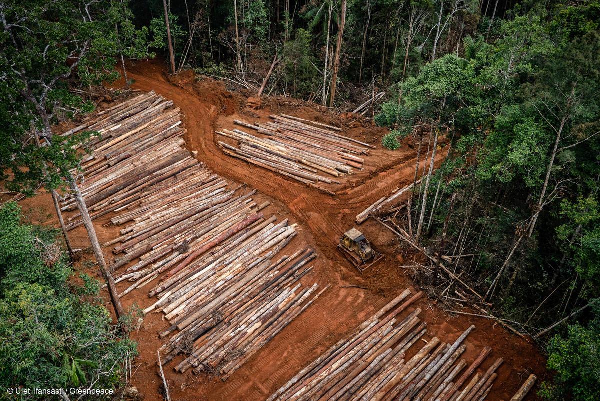 PT Inocin Abadi Logging Concession in Papua in April 2018. PT Inocin Abadi is part of the Korindo group. Photo credit: © Ulet Ifansasti / Greenpeace