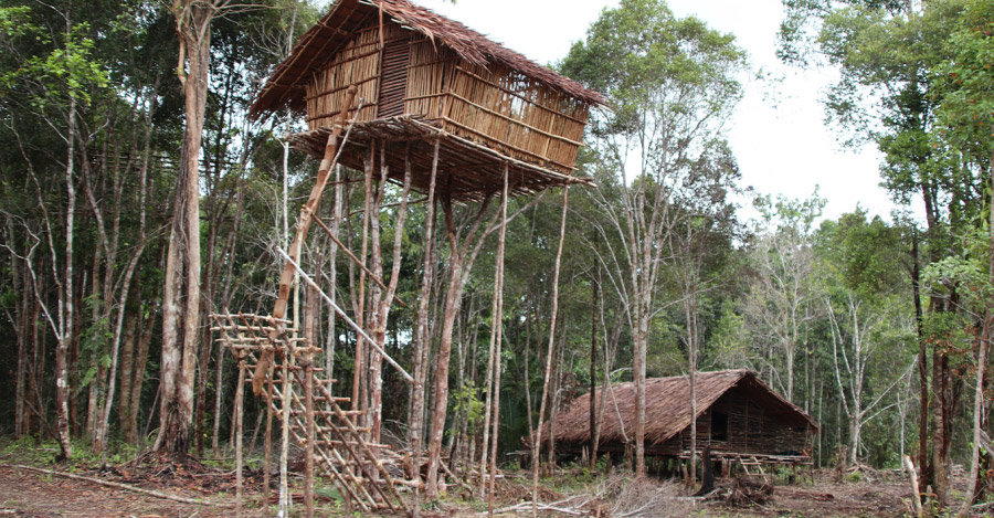 Traditional elevated house used by some Indigenous peoples in Papua. Photo credit: EcoNusa