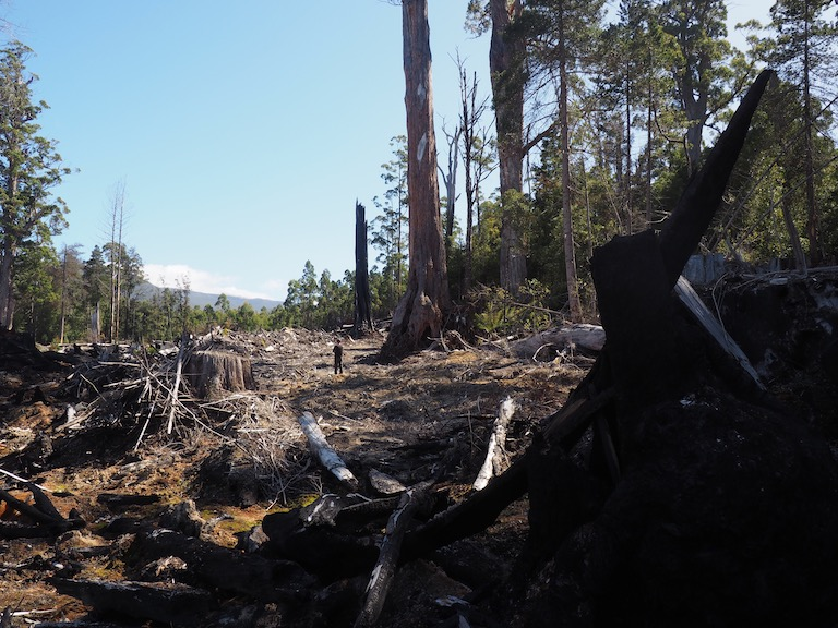 A logged and burned native forest in the Denison Range of southern Tasmania. Image by Nick Rodway for Mongabay.