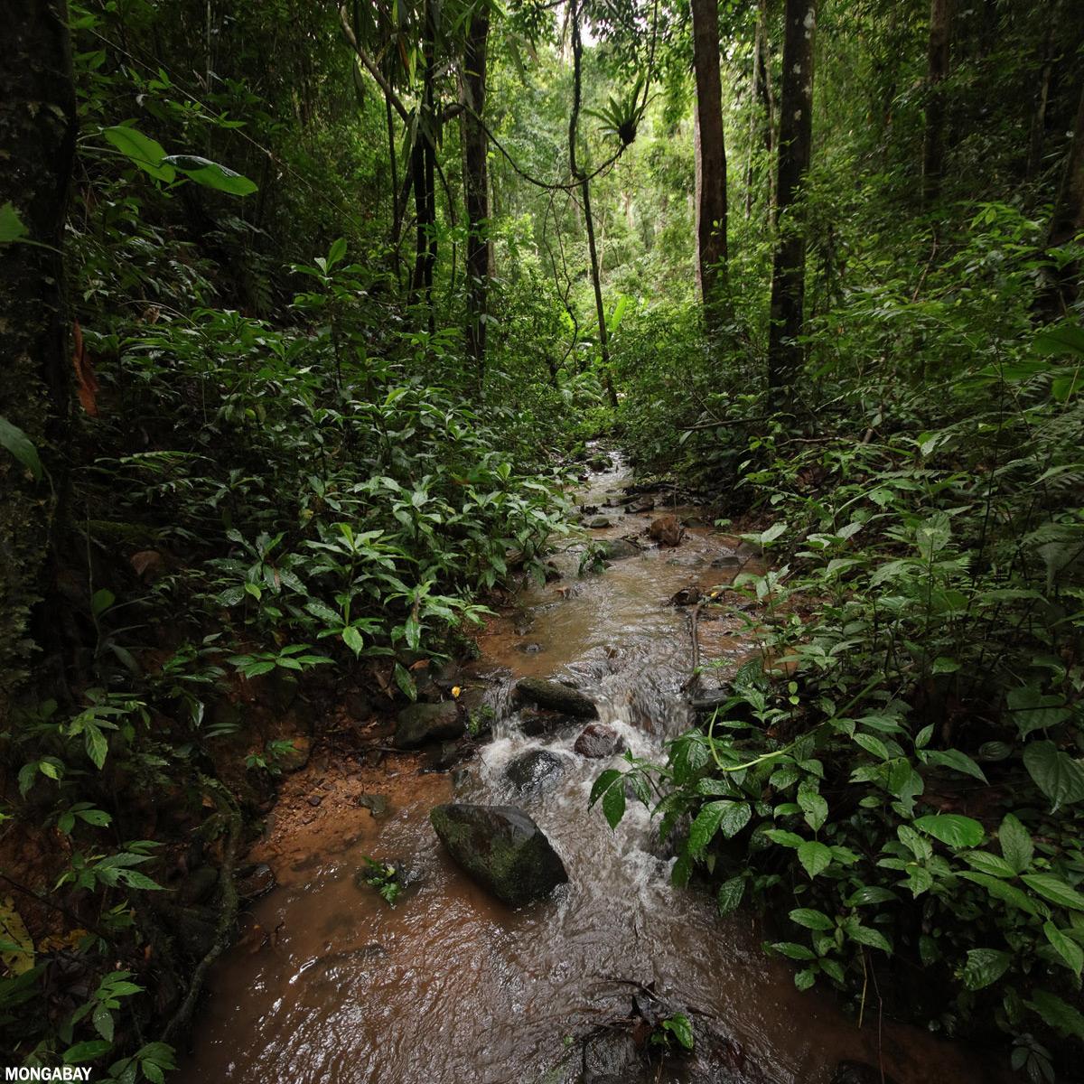 Rainforest in Xishuangbanna, Yunnan, China. Photo credit: Rhett A. Butler