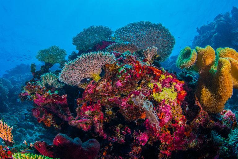 Layang Layang Atoll, Spratly Islands, South China Sea.