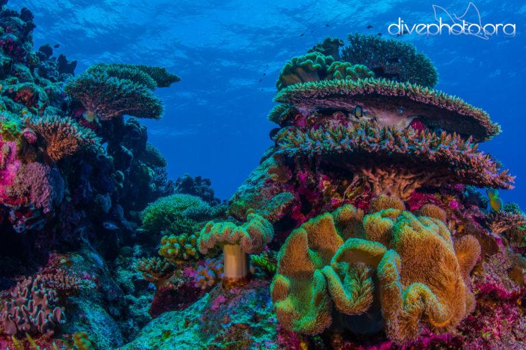Layang Layang Atoll, Spratly Islands, South China Sea. Photo by Greg Asner / DivePhoto.org