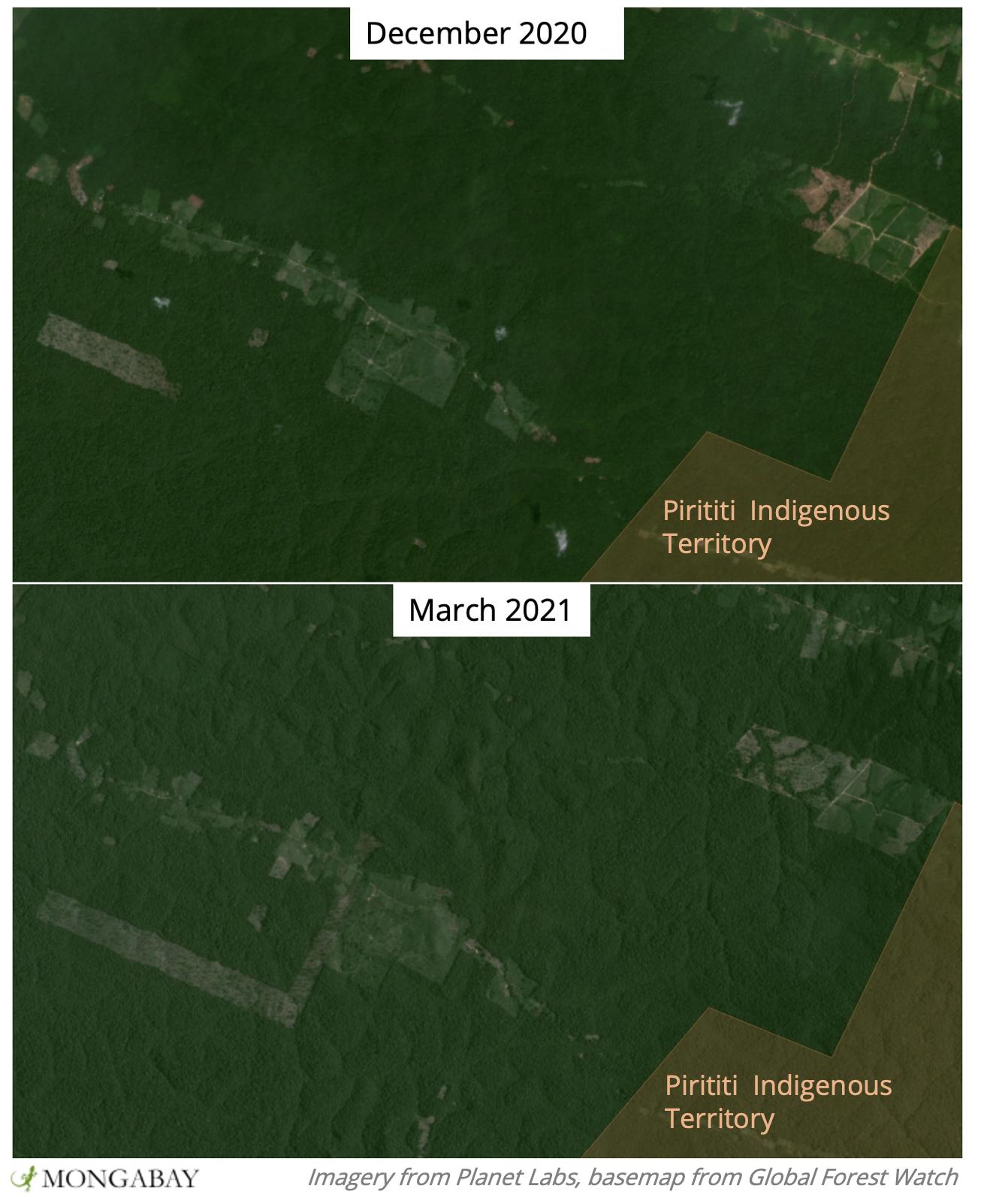 Satellite images show recent deforestation near Piriti Indigenous Territory.