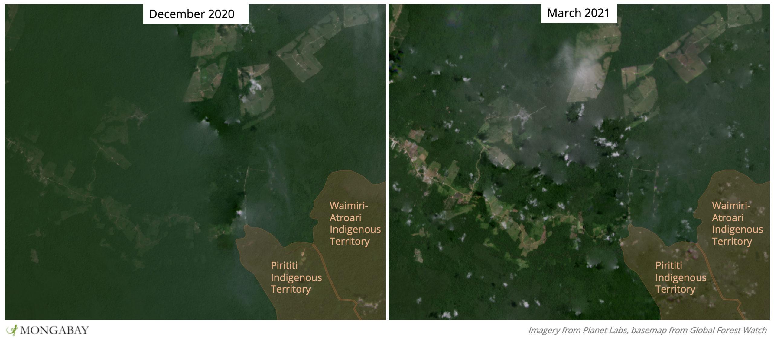 Satellite images show recent deforestation near Waimiri-Atroari Indigenous Territory.