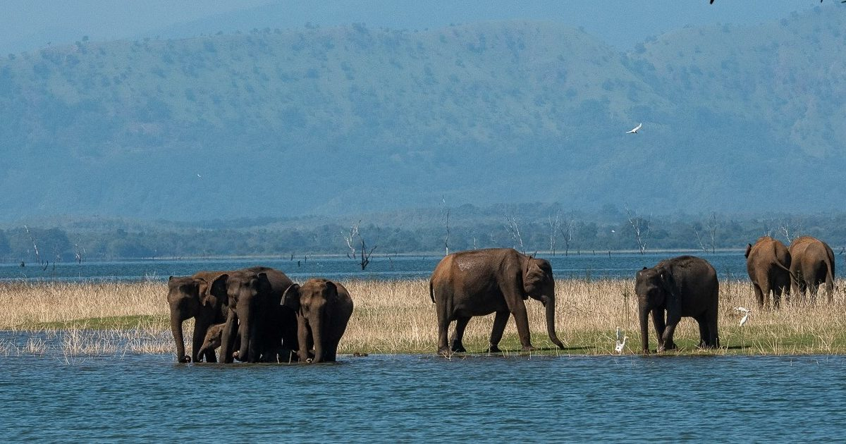 Farmers move to occupy a critical elephant corridor in Sri Lanka