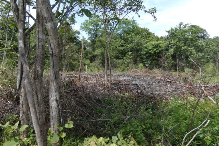 Patches of Dahaiyagala's forest were burned by a mob on Feb. 7, 2021. Image courtesy of Sameera Weerathunga.