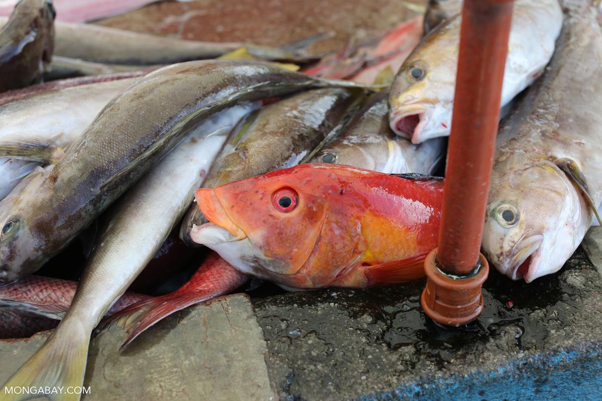 Fish market in Puerto Ayora. Photo credit: Rhett A. Butler