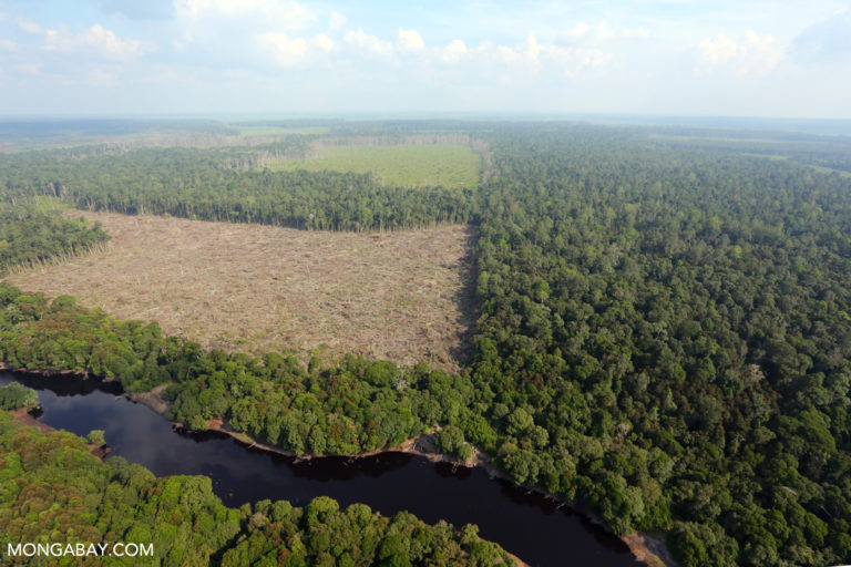 Forest illegally cleared for oil palm in Riau Province. Photo by Rhett A Butler