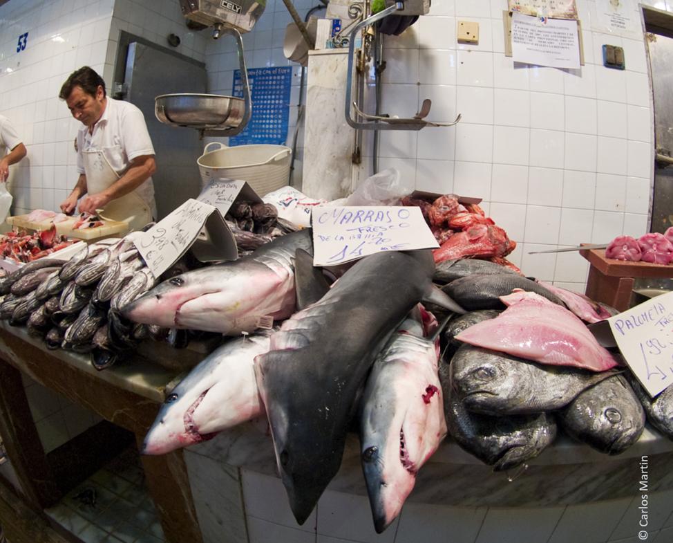 Shortfin Mako (Isurus oxyrinchus) à venda em um mercado de peixes. Imagem © Carlos Martin cedida por Shark Trust.