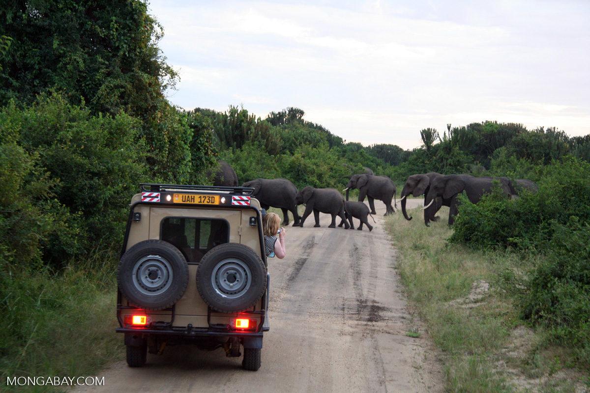 Tourists on safari. Photo credit: Rhett A. Butler