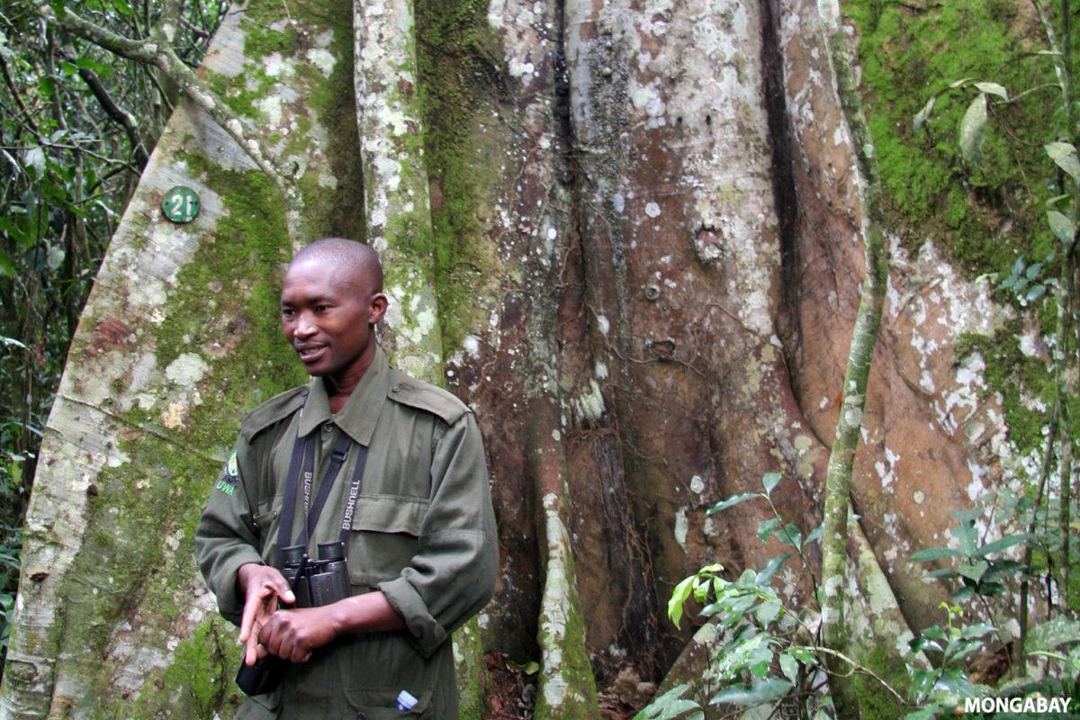 Forest ranger. Photo credit: Rhett A. Butler