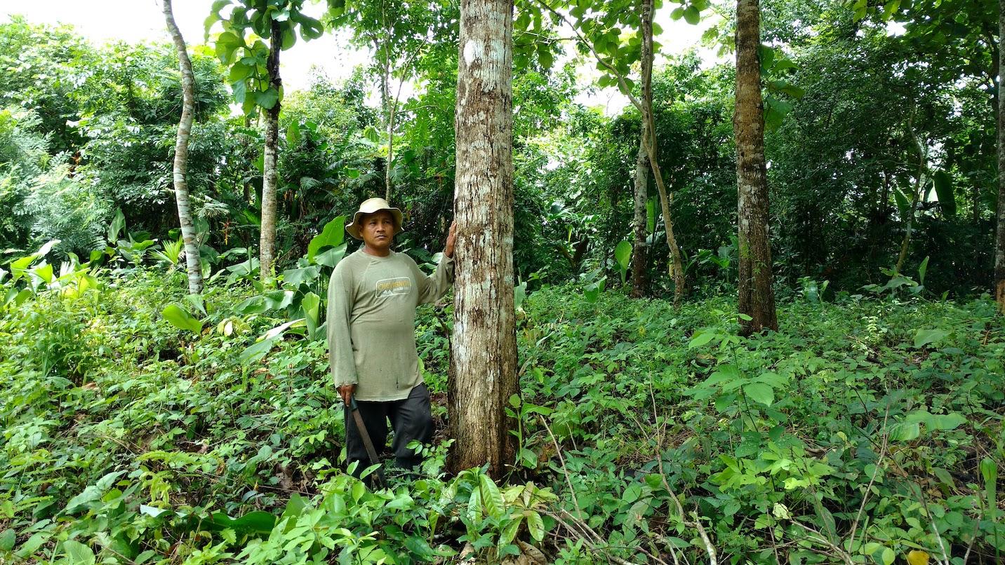 Trees used i