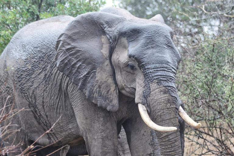 Elephant in South Africa. Photo credit: Rhett A. Butler