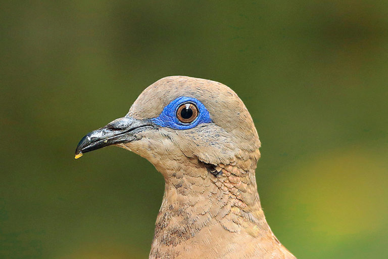 The birds of Zoom (commentary)