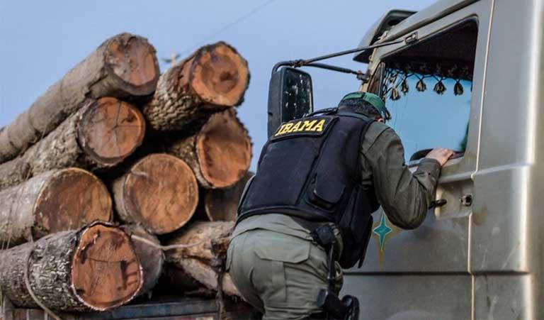 brazil minister illegal timber