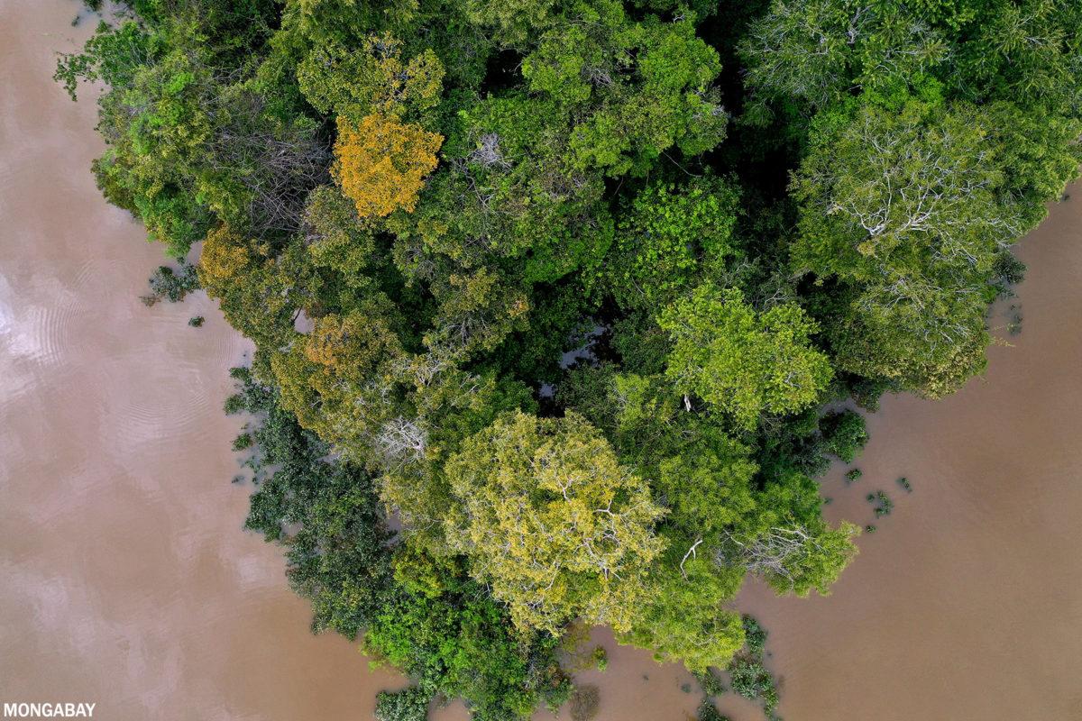 Amazon rainforest canopy. Photo credit: Rhett A. Butler / mongabay