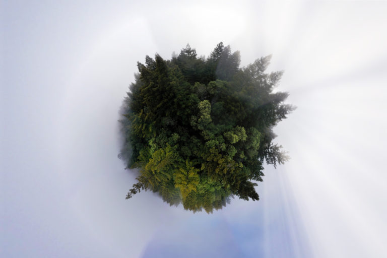 Panoramic sphere view of a redwood forest in California. Photo credit: Rhett A. Butler / Mongabay