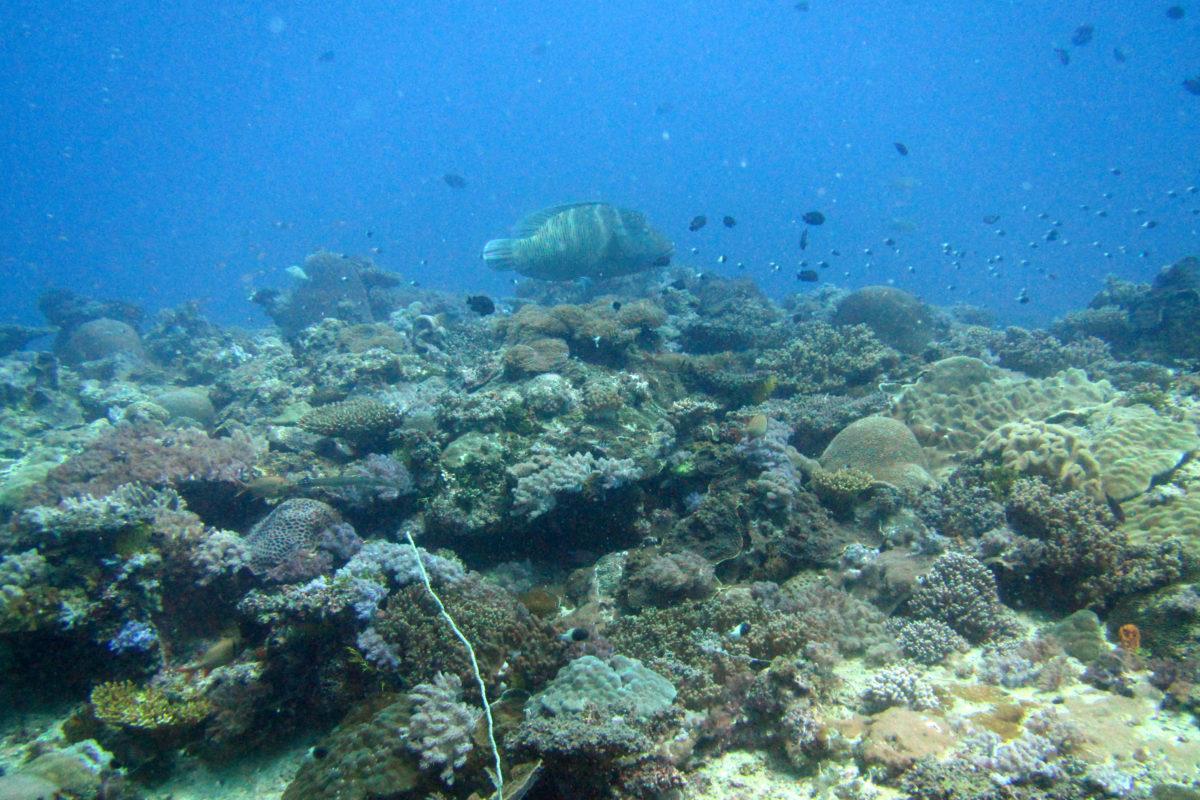 Quirimbas Coral Mozambique