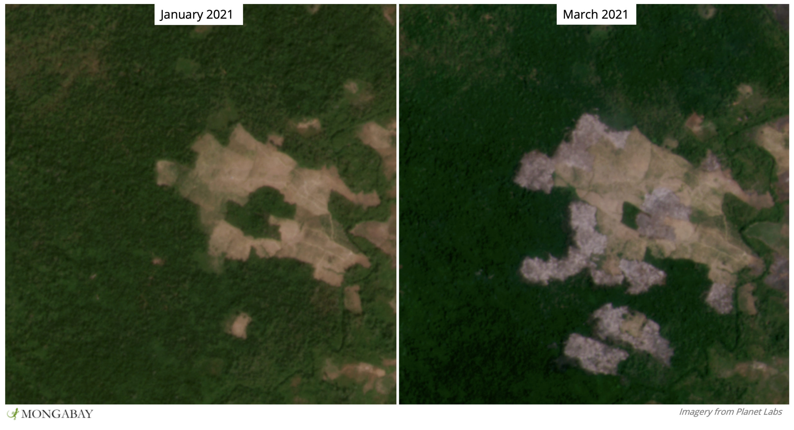 Satellite imagery shows the recent expansion of a previously cleared area into primary forest in Keo Seima Wildlife Sanctuary.