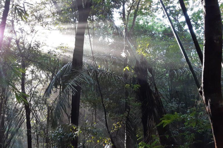 Keo Seima forest. Image by user Pygathrix nigripes via Wikimedia Commons (CC BY-SA 4.0).