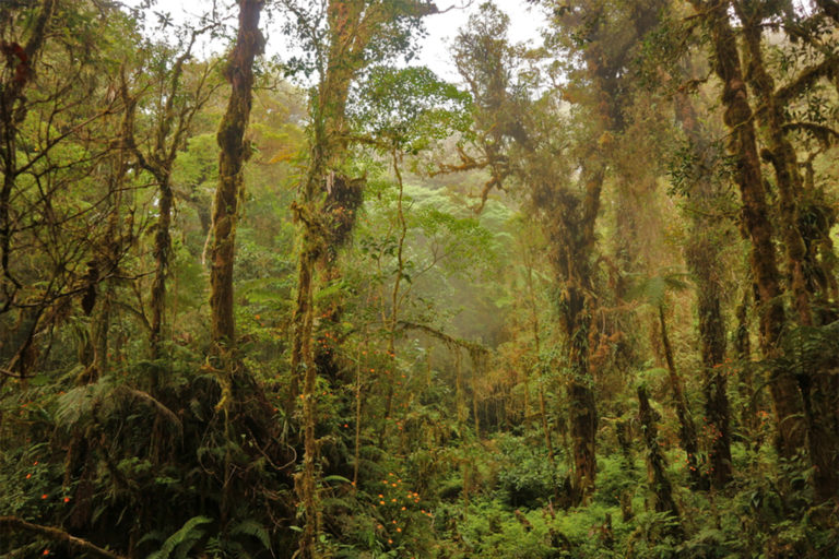 Mossy forest in Mindanao.