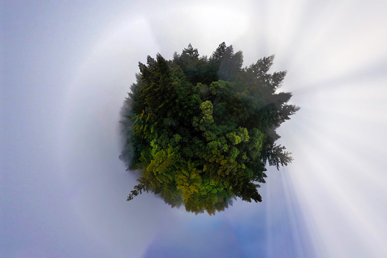 Sphere panoramic photo of redwoods in California. Photo credit: Rhett A. Butler