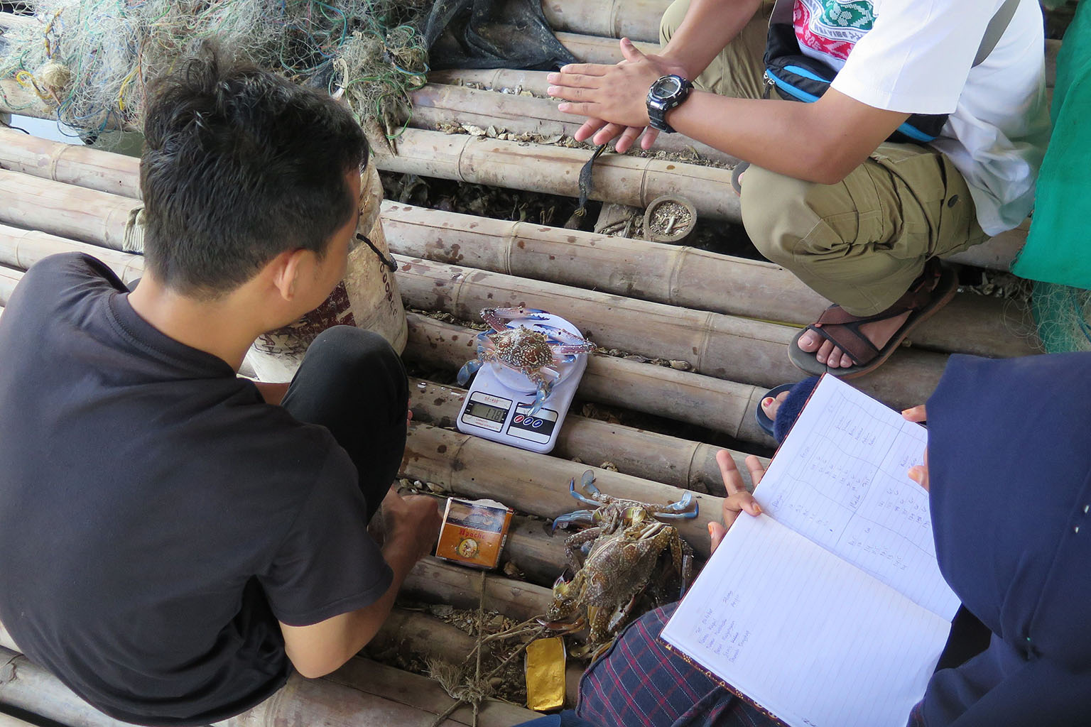 Measuring a blue swimming crab in Indonesia. Photo credit: EDF