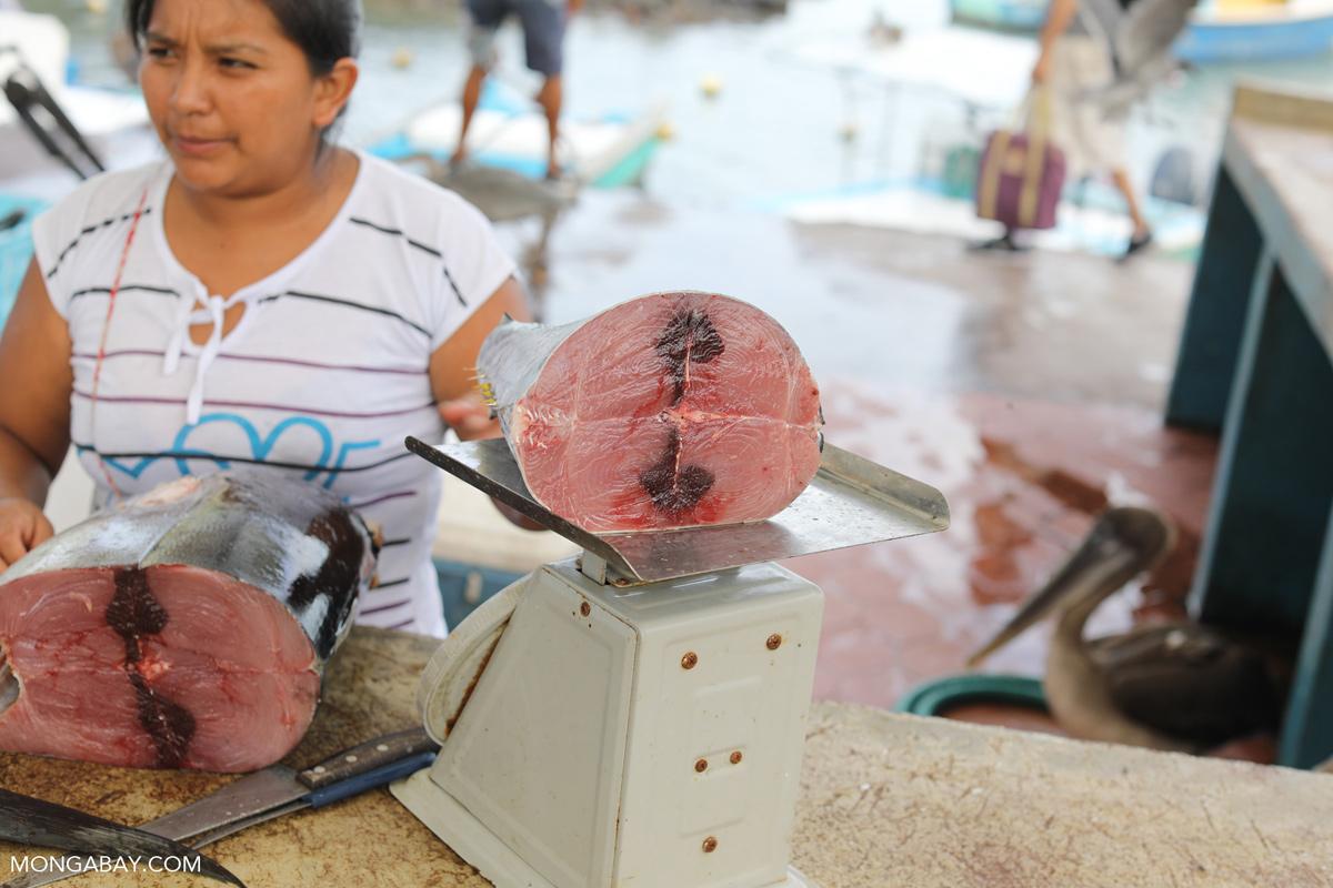 Tuna in a fish market in Ecuador. Photo credit: Rhett A. Butler