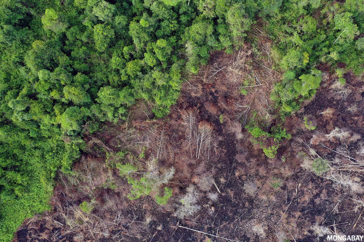 Deforestation in Borneo. Photo credit: Rhett A. Butler