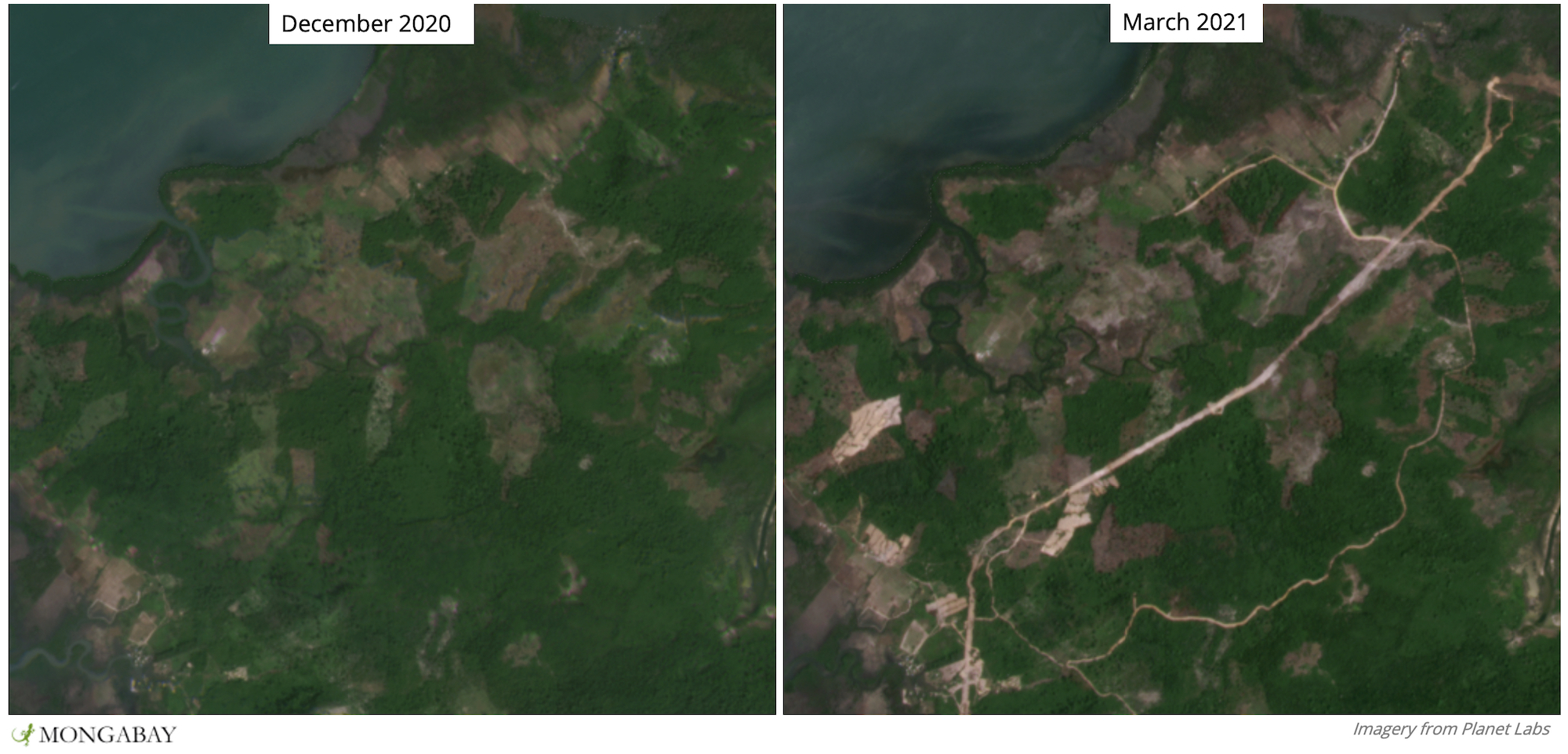 Over the past few months a road has appeared in a northern portion of Botum Sakor, along with associated deforestation - including in mangrove areas.