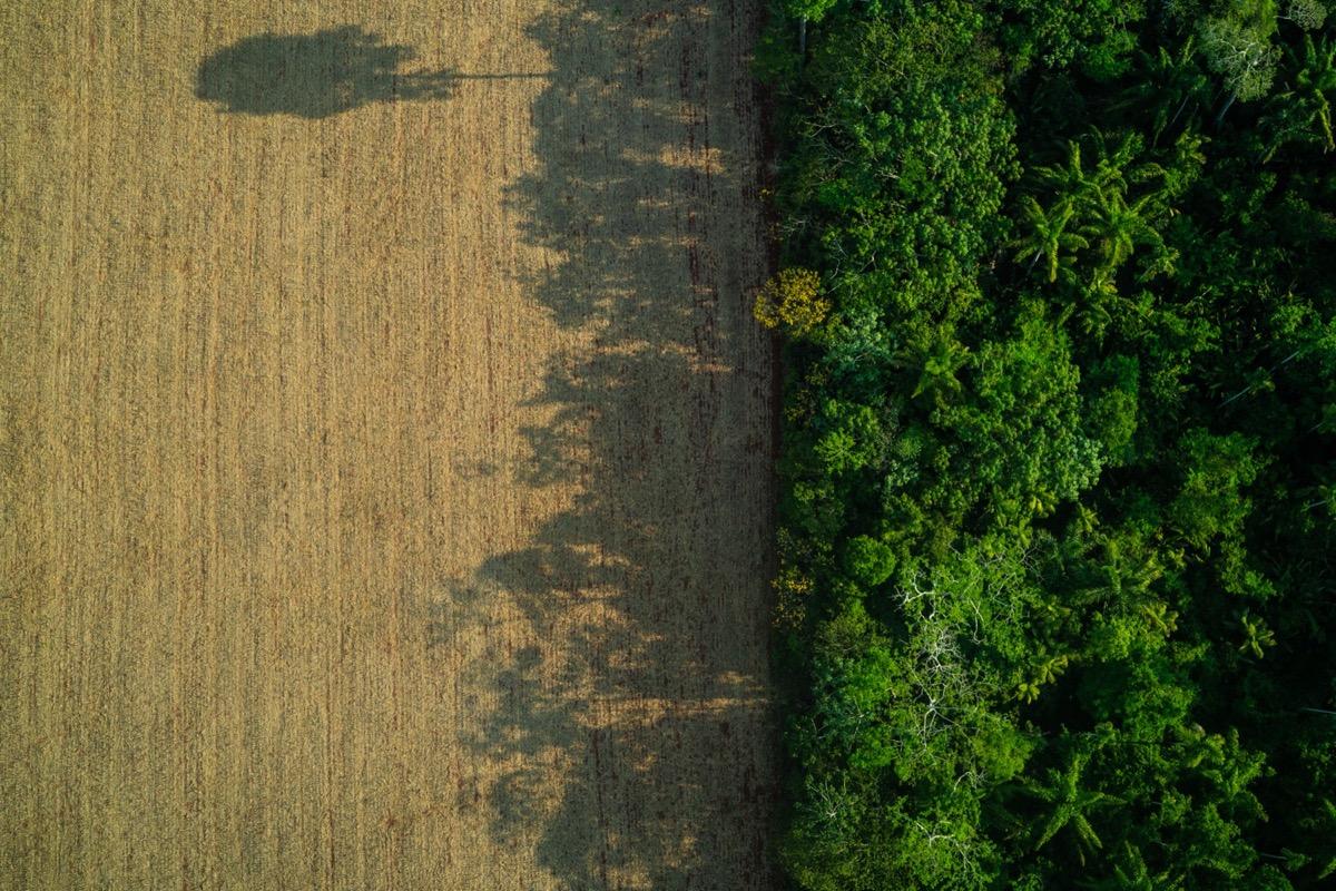 Soy field in the Rondonia, the Brazilian Amazon. Photo credit: Fabio Nascimento