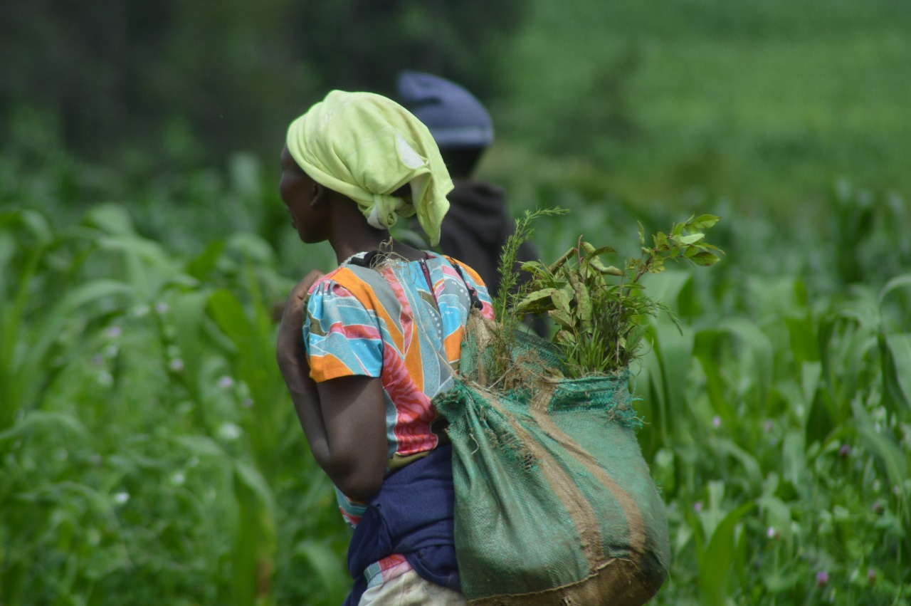 A women working in a tree nursery to supply reforestation in the Maji Mazuri and Makutano forests of Kenya. Photo by The Green Belt Movement courtesy of Ecosia.