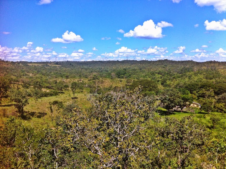 The Cerrado is a mix of shrubby dry forest and savannah, and is one of Brazil's most exploited ecosystems. Image by Fabricio Carrijo via Wikimedia Commons (CC BY-SA 4.0).