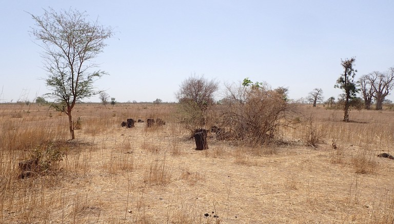 Arid savannah in the Kaolack province of Senegal. Image by Tobias 67 via Wikimedia Commons (CC BY-SA 4.0).