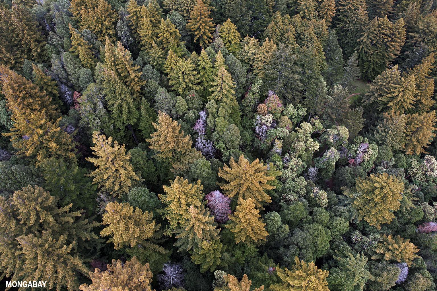 Redwood trees in California. Photo credit: Rhett A. Butler