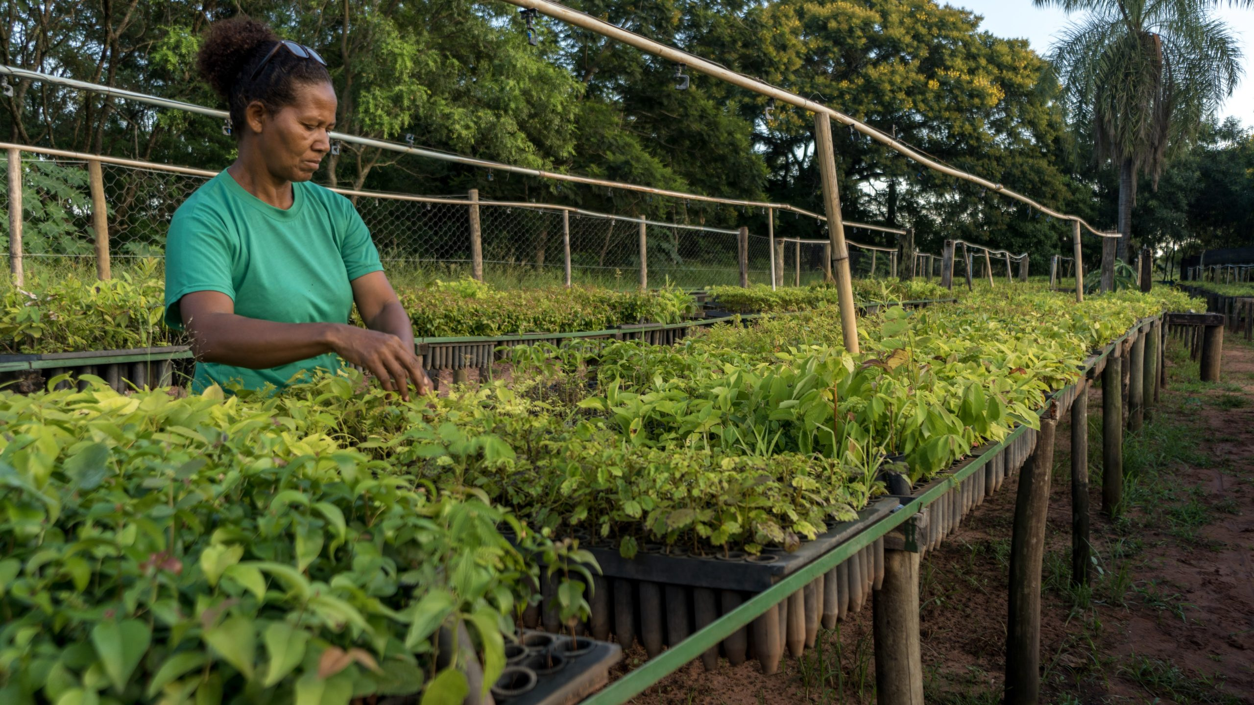 A woman works in one of the seedling nurseries that supports reforestation efforts in the Pontal. IPÊ - Instituto de Pesquisas Ecológicas.