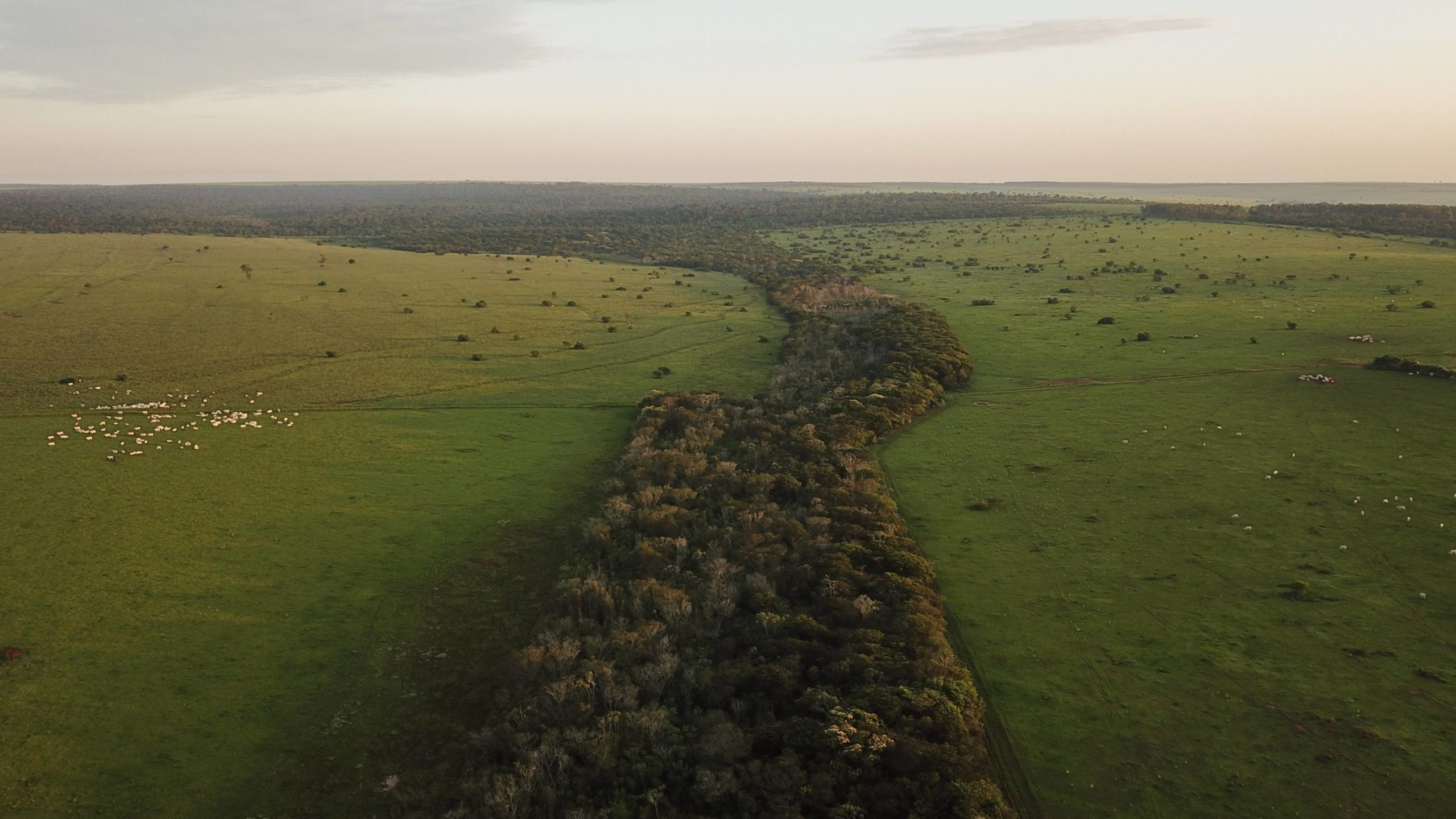 A forest corridor planted on farmland provides critical connectivity for wildlife to move between forest fragments. Photo by IPE via Ecosia.