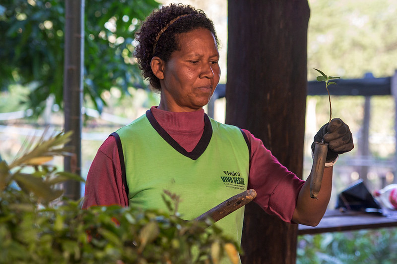 Maria Regina E. S., a nursery worker, checks the quality of the seedlings before they are transplanted to the new forest. Photo courtesy of ©WeForest.