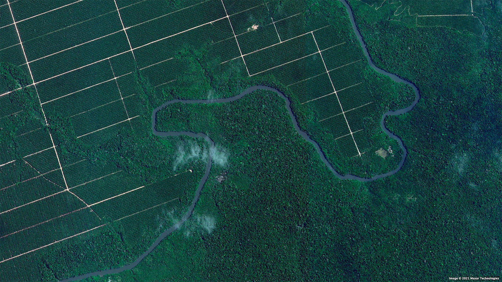 Satellite image of Agropalma's plantation near Tailândia, Brazil. Photo credit: Maxar Technologies.