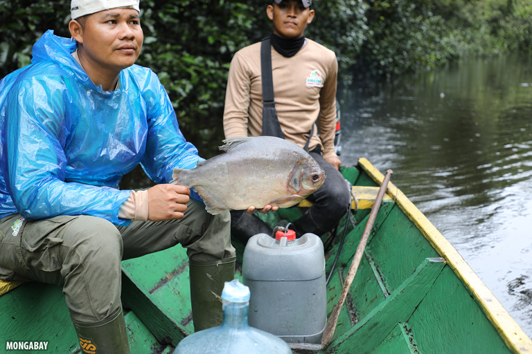 Indigenous Amazonian guides with a pacu in Peru. Image by Rhett A. Butler/Mongabay.