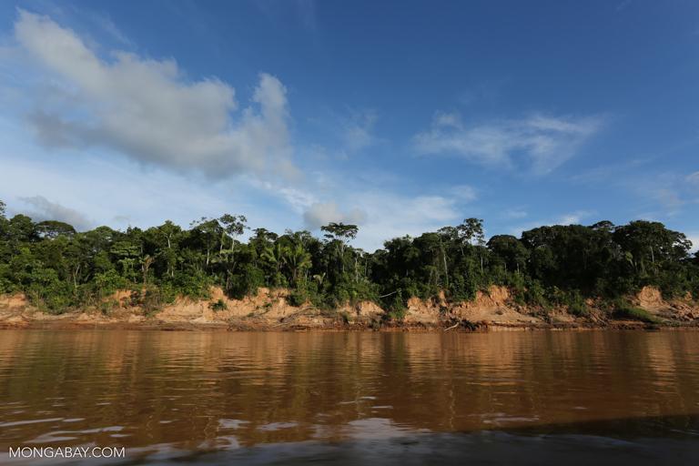 Rainforest along the Tambopata River. Image by Rhett A. Butler/Mongabay.
