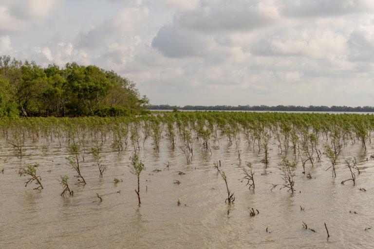 mangroves vietnam