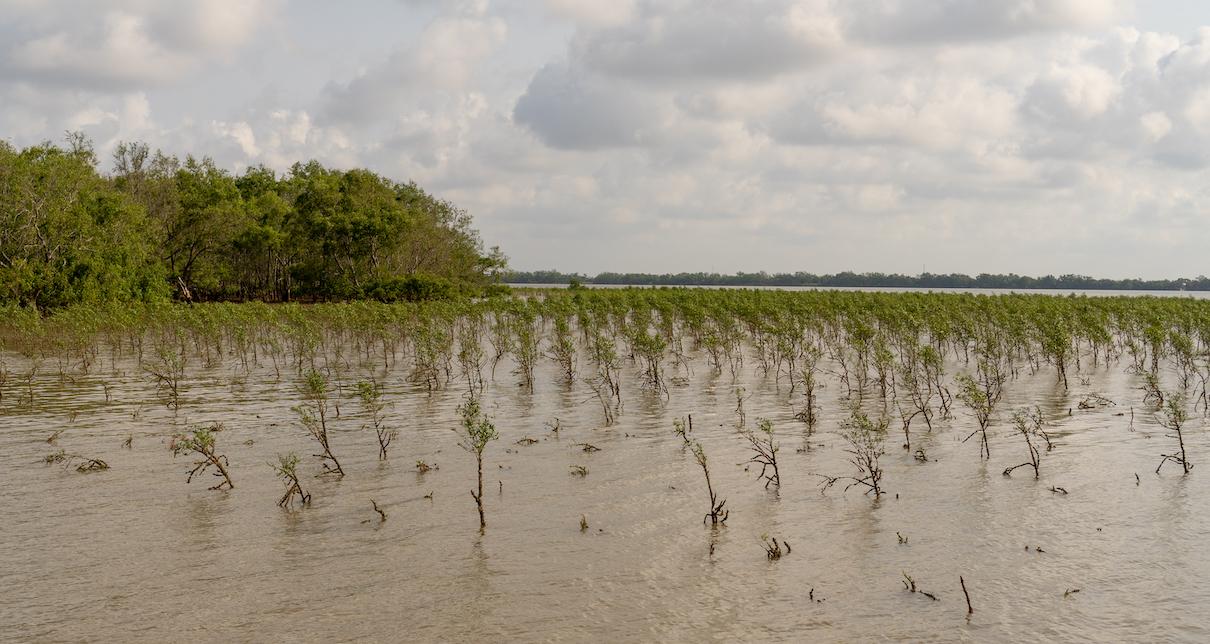 Mangroves-5-1