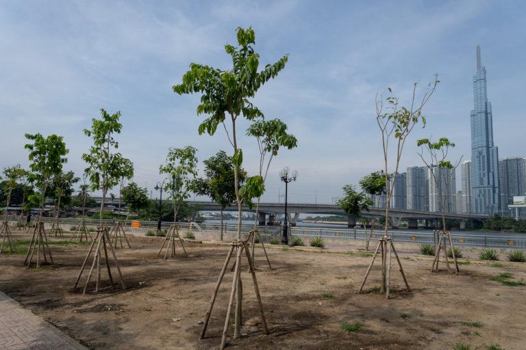 vietnam trees