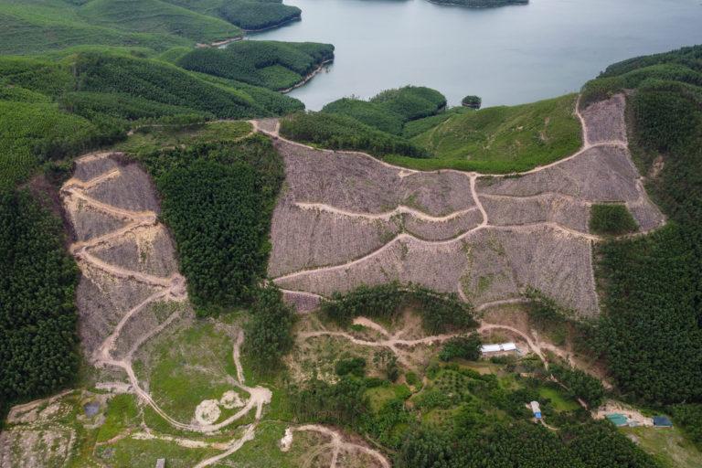 cleared acacia plantation