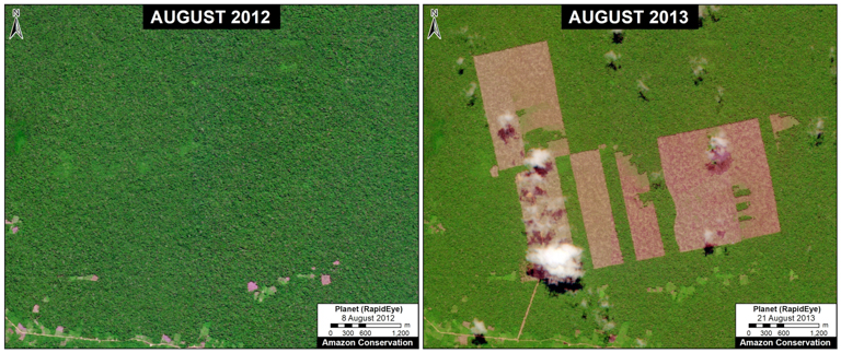 Images from the same location one year apart at the plantation site reveal the deforestation that occurred. Image courtesy of MAAP.