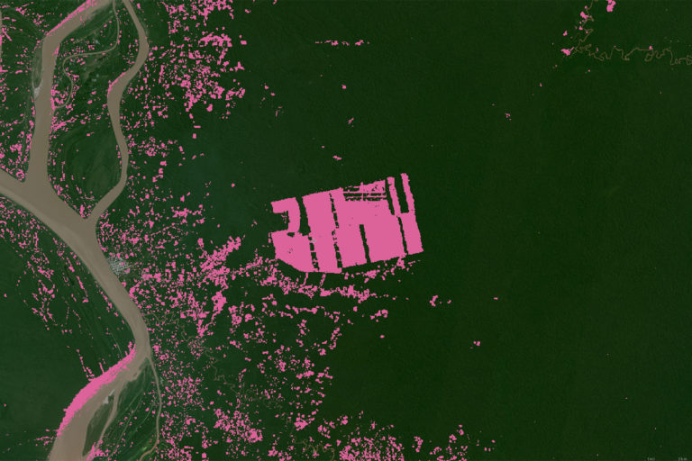 Global Forest Watch tree cover loss 2001-2021 set on Planet imagery from Jun-Sep 2020.