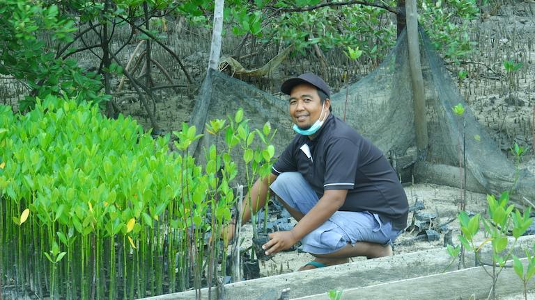 Mangrove Guardians